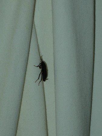Palmeraie Village Residence: cafard présent sur rideau à peine ai je franchi les lieux !!!!