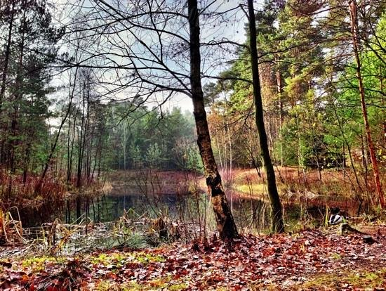 Center Parcs - Bispinger Heide: uriger Wald auf dem Gelände