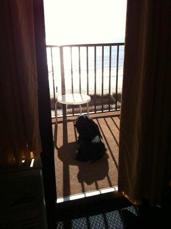 Ocean Park Resort, Oceana Resorts: Puppy enjoying the view