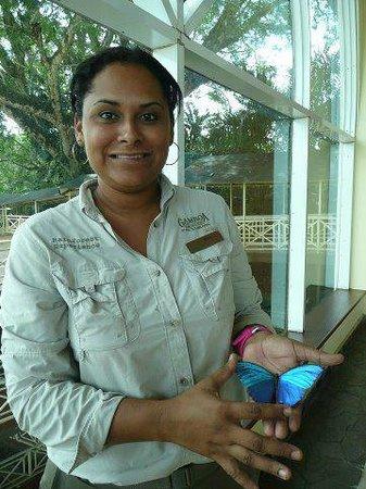 Gamboa Rainforest Resort: Tour Desk guide holding a blue morpho butterfly specimen.