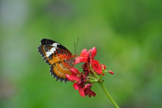 Phuket Botanic Garden: butterfly garden