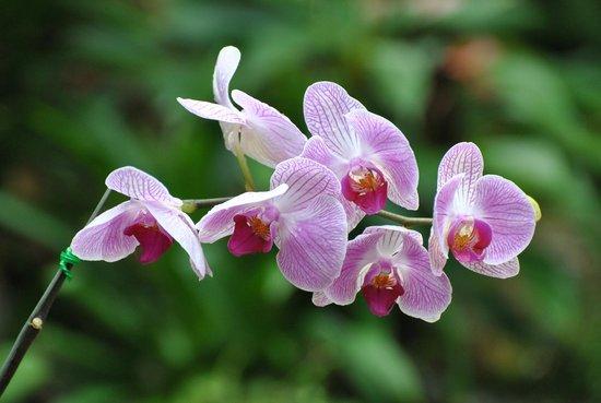 Phuket Botanic Garden: Orchid garden