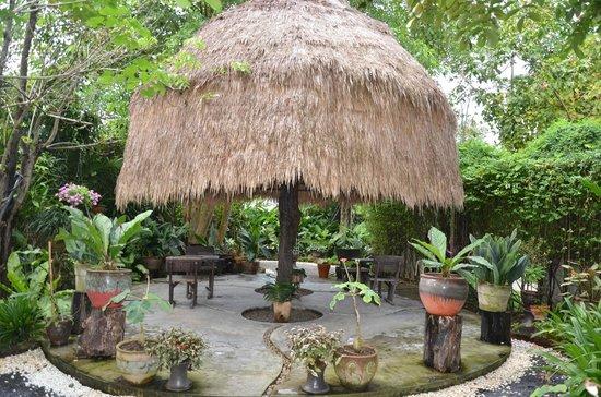 Phuket Botanic Garden: Coconut Grove