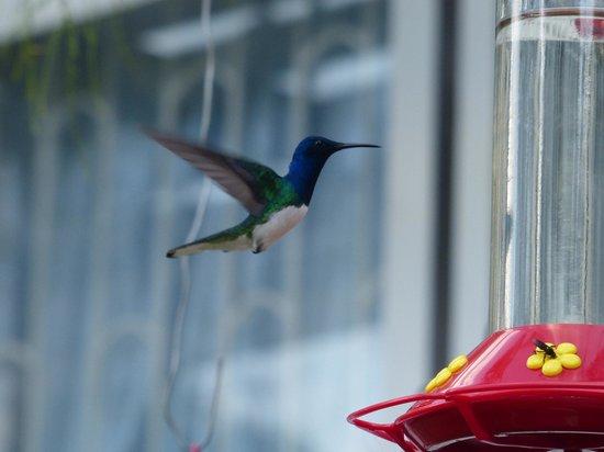 Yerette: Hovering hummingbird
