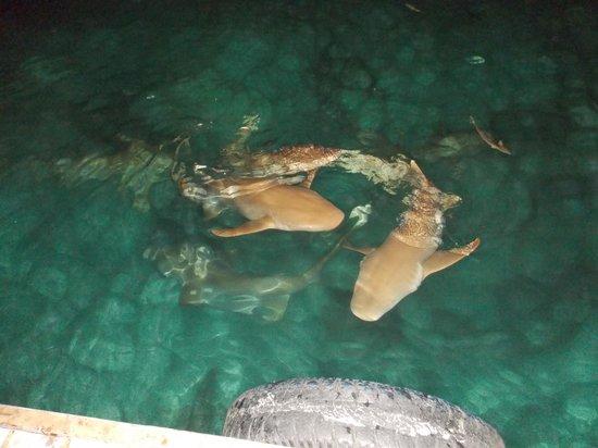 VOI Maayafushi Resort: questi possono sempre far comodo ahahah