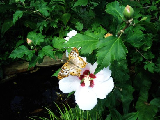 Museum of Life + Science: One of many diverse butterfly species