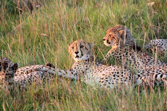 Idwala Game Lodge: Cheetah and cubs