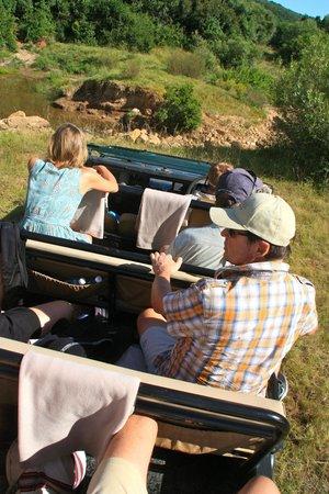 Idwala Game Lodge: safari
