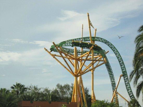 Sheikra Brilliant Picture Of Busch Gardens Tampa