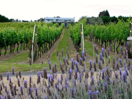Wild on Waiheke: WOW Vineyard