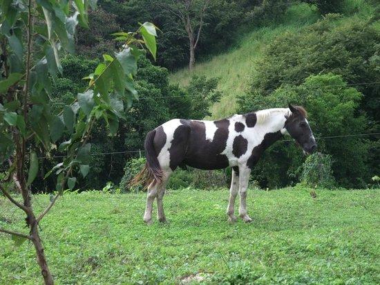Finca Canas Castilla: Guido s Pferde