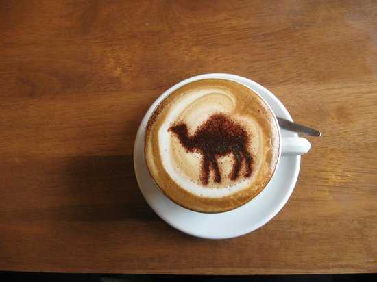 Fat Camel: the best coffee in New Zealand ... and the most beautiful cup
