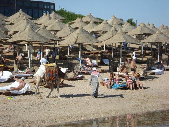 Serenity Makadi Heights: Cammello sporca spiaggia(nonostante il sacchetto)