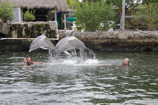 Dolphins Plus - Key Largo: awesome