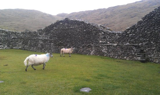 Staigue Fort: Met up with a few sheep in the fort,