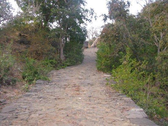 Kumbhalgarh Wildlife Sanctuary: Road on the way out.