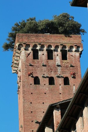 Guinigi Tower: Scorcio