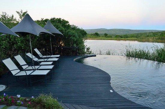 Kichaka Luxury Game Lodge: Main lodge pool