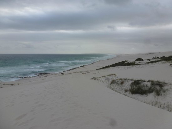 De Hoop Collection Nature Reserve: White sand dune - Koppie Alleen
