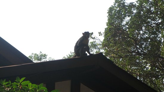 Hotel Woodlands Matheran: Surprise Guests
