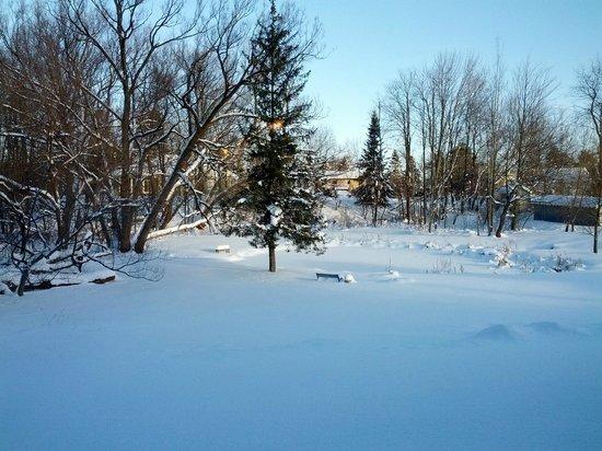 Ancestral Knowlton B&B: backyard