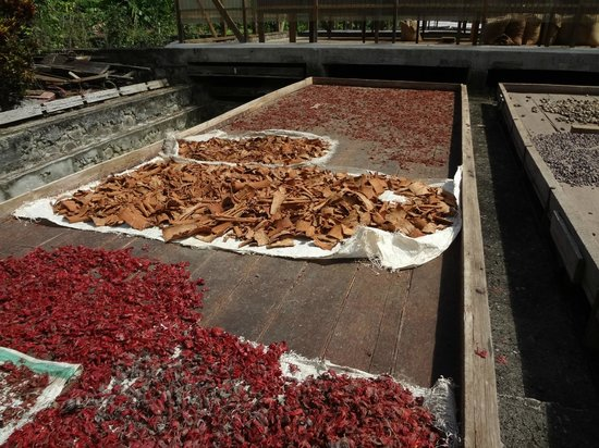 Belmont Estate: Drying cocoa and cinnamon
