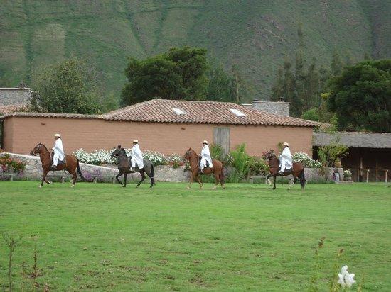 Sol y Luna: show de caballos de paso frente al comedor