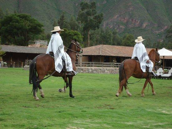 Sol y Luna - Relais & Chateaux: caballos de paso peruanos