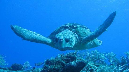 Eco Divers : La Caguama