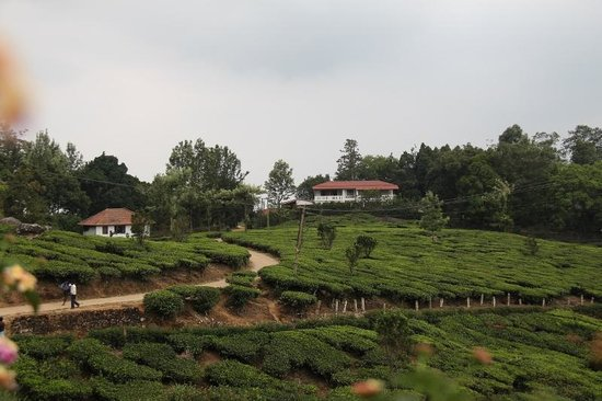 Windermere Estate, Munnar, Kerala