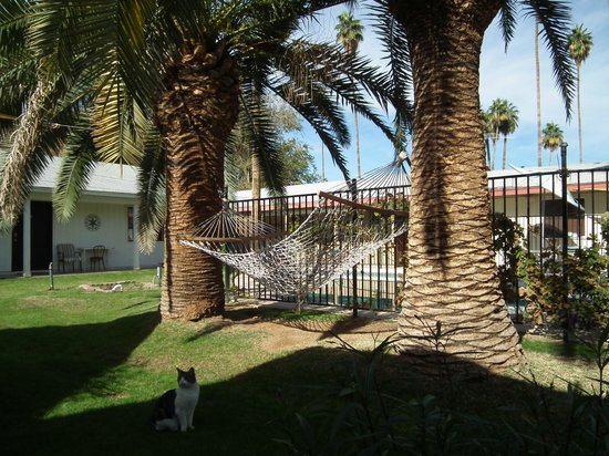Raz Inn: Hammock beside Pool area