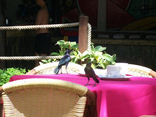 Isla Caribe Beach Hotel: The Blackbirds