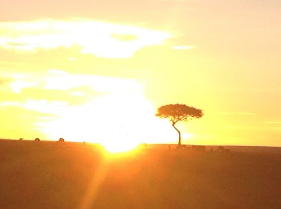 Oltome Resorts: Sunset at the Mara