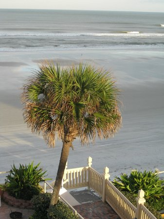 Lexington Inn & Suites: Palm Tree