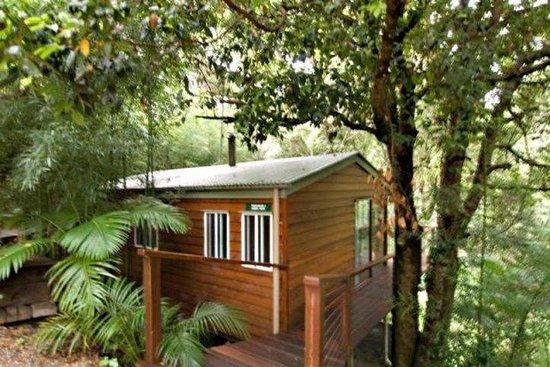 Kondalilla Eco Resort: Standard Tree House