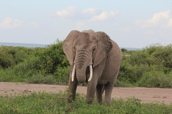 Kilima Safari Camp: Elefante