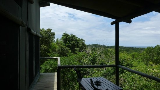 Wilderness Safaris Rocktail Camp: patio with view on the forest / horizon