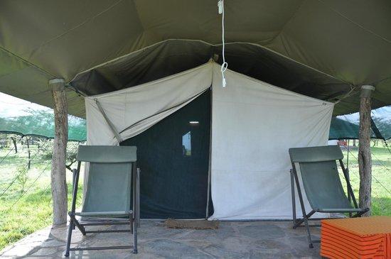 Nyumbu Camp: Tent 14, Kobe (tortoise)