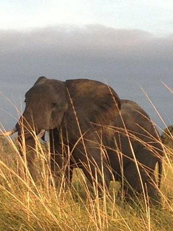 andBeyond Xaranna Okavango Delta Camp: l'Afrique