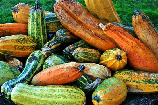 Agriturismo Gattogiallo: colori d'autunno