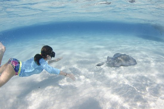 Cayman Private Charters: swimming with the rays