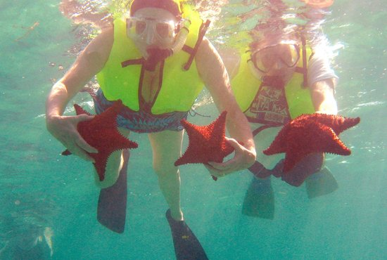 Upachaya Eco-Lodge: sea stars galore