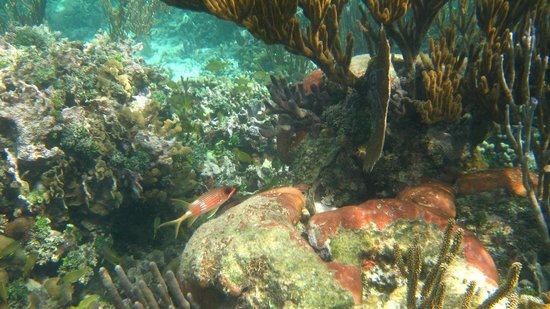 Upachaya Eco-Lodge: more snorkeling, squirrelfish