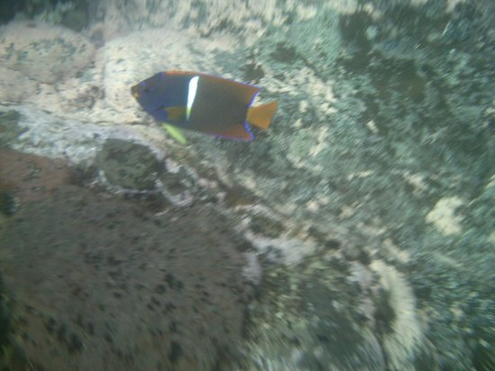 Hacienda del Mar: snorkeling right off beach