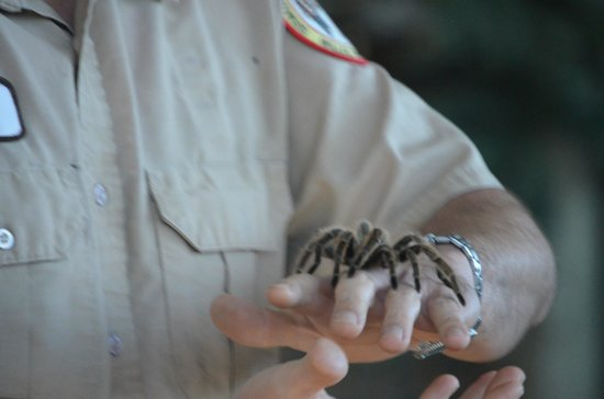 Billie Swamp Safari: Spider in Critter show