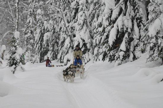 Aventure du Husky: a mi parcours de la randonnée