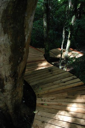 Brick Bay Sculpture Trail: The sculpture trail takes you through some wonderful native forest.