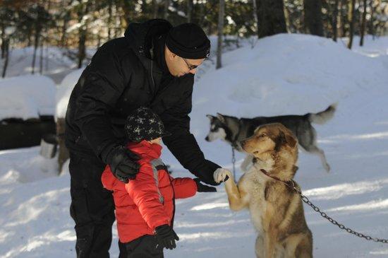 Aventure du Husky: la gentillesse de mes chiens