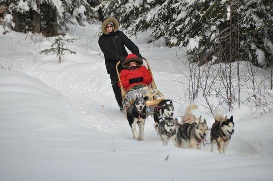 Aventure du Husky: une aventure inoubliable