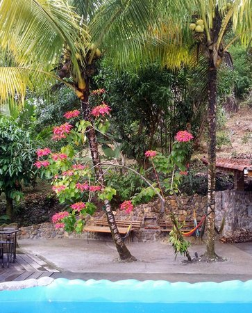 Omega Tours Eco Jungle Lodge: Beautiful poinsettia near pool